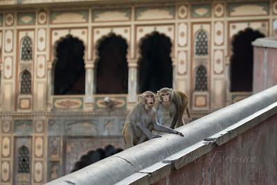 Galta Ji (Monkey Temple), Jaipur