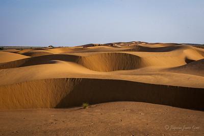 Thar Desert  of Rajasthan