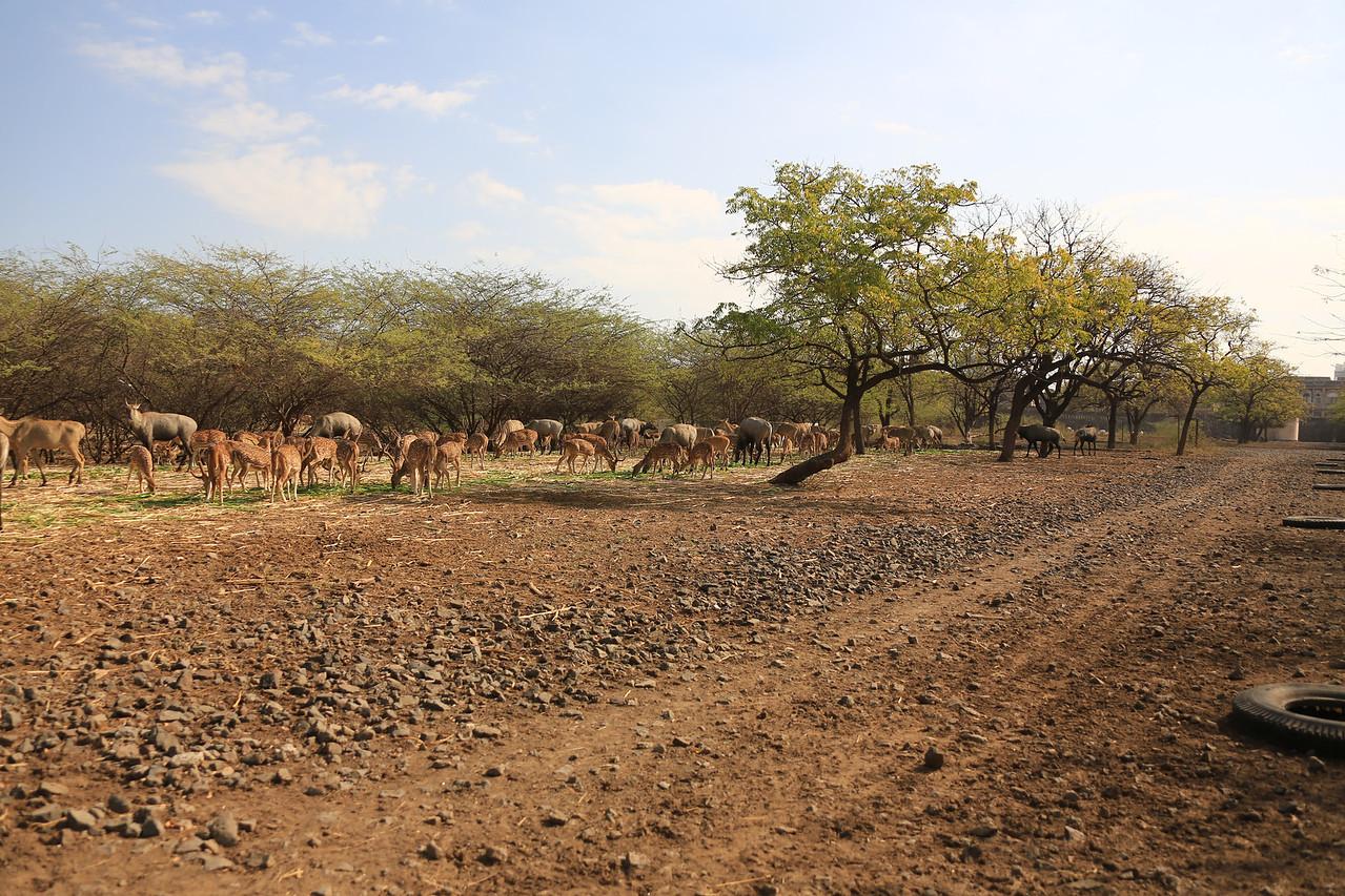 Maharjah's private game preserve.