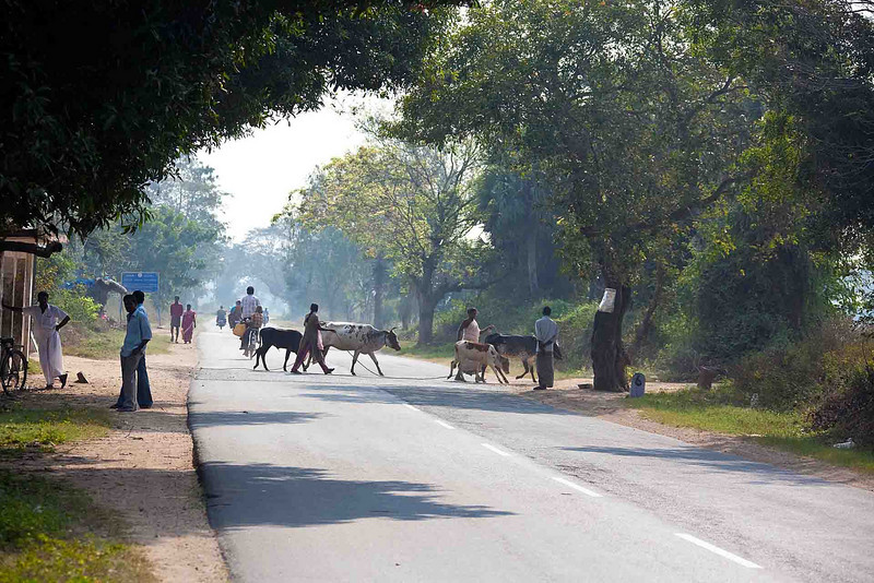 The roads are in generally pretty good shape, but they're filled with obstacles, bicycles, tuk-tuks (in cities), motor bikes, pedestrians, other cars, trucks, and fairly frequently, cattle or goats. This is a typical rural road.