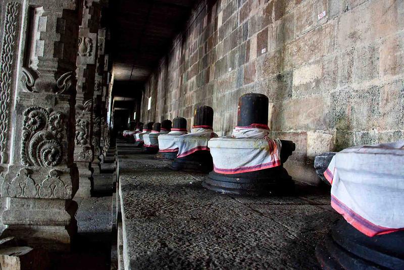 Linga (plural of Lingam), phallic symbols of Shiva