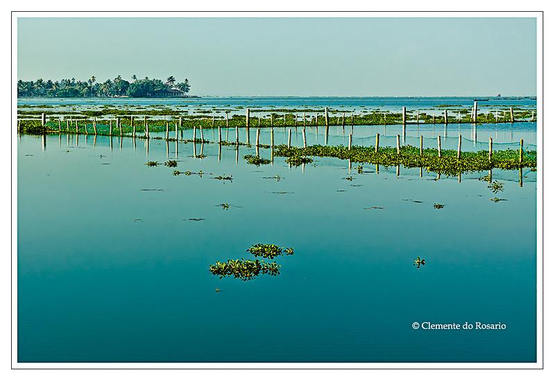 A view from Kumarakom Lake Resort of Vembanada Lake, largest lake in Kerala, India<br /> File Ref: Kerala-2006 108R