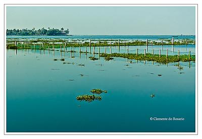 A view from Kumarakom Lake Resort of Vembanada Lake, largest lake in Kerala, India File Ref: Kerala-2006 108R