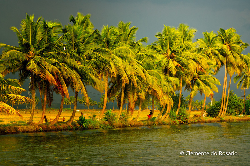 Palm Trees along the backwaters in Kerela, India<br /> File Ref: Kerala-2006 152R 1520 1521_.jpg