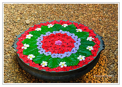 Onam Pookalam floral design in Kerala, India File Ref: Kerala-2006 117R