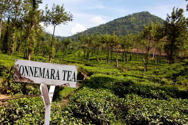 Up, up in the mountains, there's tea, lots and lots of tea!