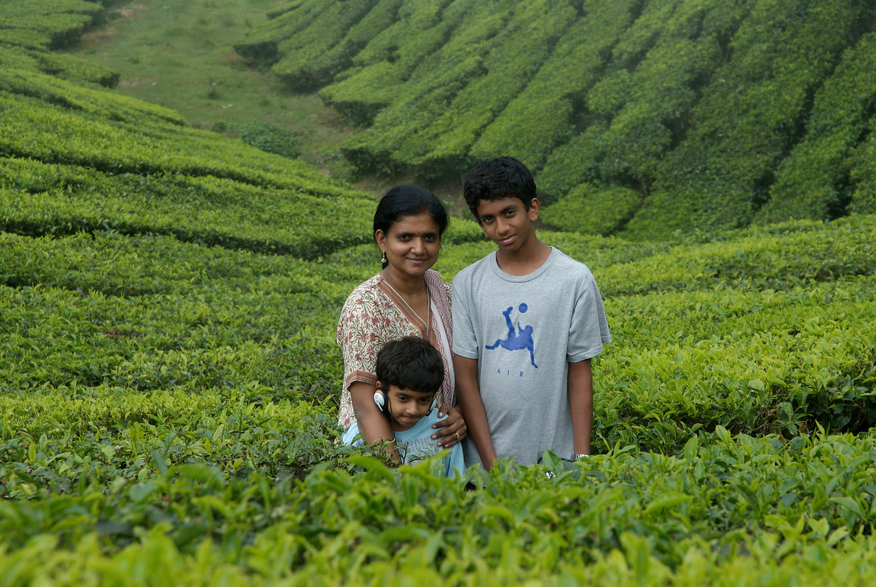 Amongst the Tea Estate.