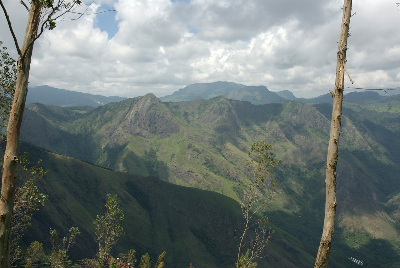 View from the Tea Estate.