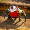 Elephant Ride, Amer Fort, Jaipur,Rajasthan,India