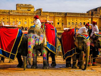 Amer Fort, Jaipur,Rajasthan,India