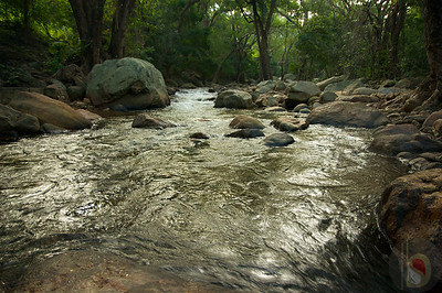 Kalakadu Wildlife Sanctuary - Tirunelveli  : India
