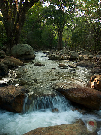 Kalakadu Wildlife Sanctuary - Tirunelveli  : India