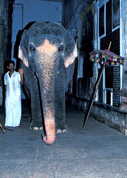 Temple  City, Madurai, South India