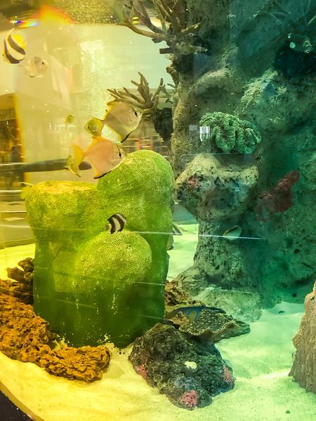 GVK One Mall Aquarium
