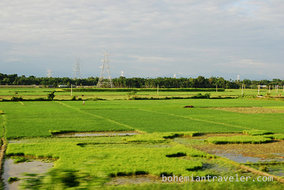 Low elevation tea plantations have given way to rice paddies; heading east, from West Bengal to Assam.