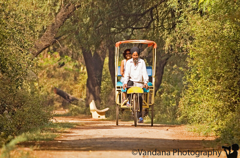 On the riskshaw driven by Sajan Singh - No.1 rickshaw puller of Bharatpur- birding on a rickshaw..when I asked him his address to send back some pictures, he asked me to address them to No.1 rickshaw, Bharatpur ! Smugmug is going to deliver to some strange addresses in the near future !