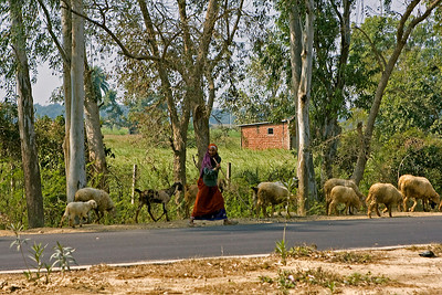 We took a ride in a horse and cart down to the local village and school - we passed this shepherd lady and her sheep and one goat along the way.