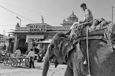 Elephant in Jodhpur, India.