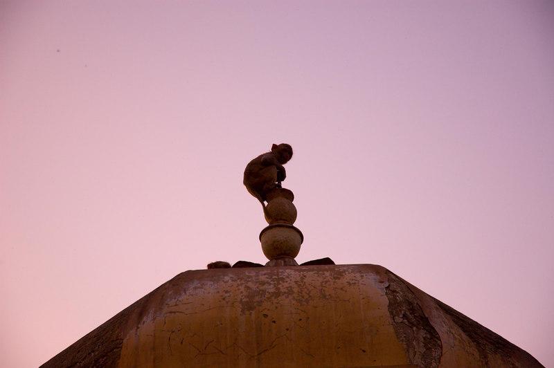 Sunset at the monkey temple near Jaipur