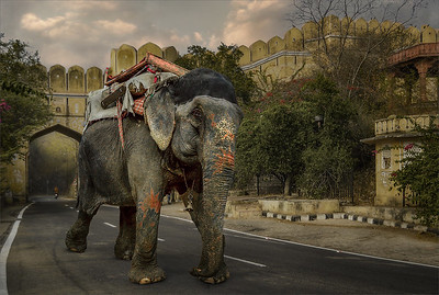 Elephant Transport