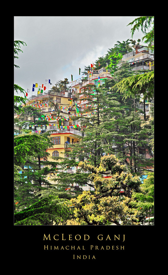 "McLeod Ganj, or as it is more commonly known in the west, Upper Dharamsala, is the home of His Holiness the Dali Lama and the seat of the Tibetan exile government. The town is located in northeastern India at the blessedly cool altitude of 5800 feet. It is to be found in the mountains north of the Kangra Valley. To get there took us five hours. The three of us and all of our gear were jammed into a taxi that hurtled thru the night from the nearest large airport in Amritsar. The first thing I noticed when we got there and the sun came up (other than the ""assertive verticality"" of the the place) was the profusion of prayer flags . Everywhere I looked, the brilliantly colored flags were flying in the breeze sending prayers into the clearing morning sky. edit"