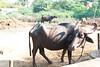 India-2870