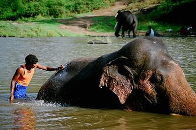 Mudumalai National Park, Tamil Nadu