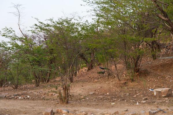 India-2610