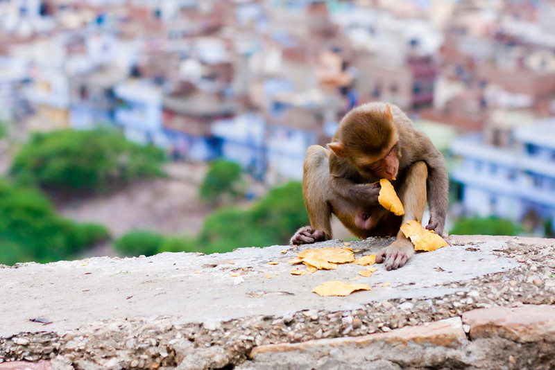 Monkeys line the street as you make your way up to monkey temple. I wonder why it's called that?