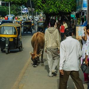 Bangalore-2623