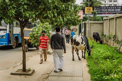 Bangalore-2712