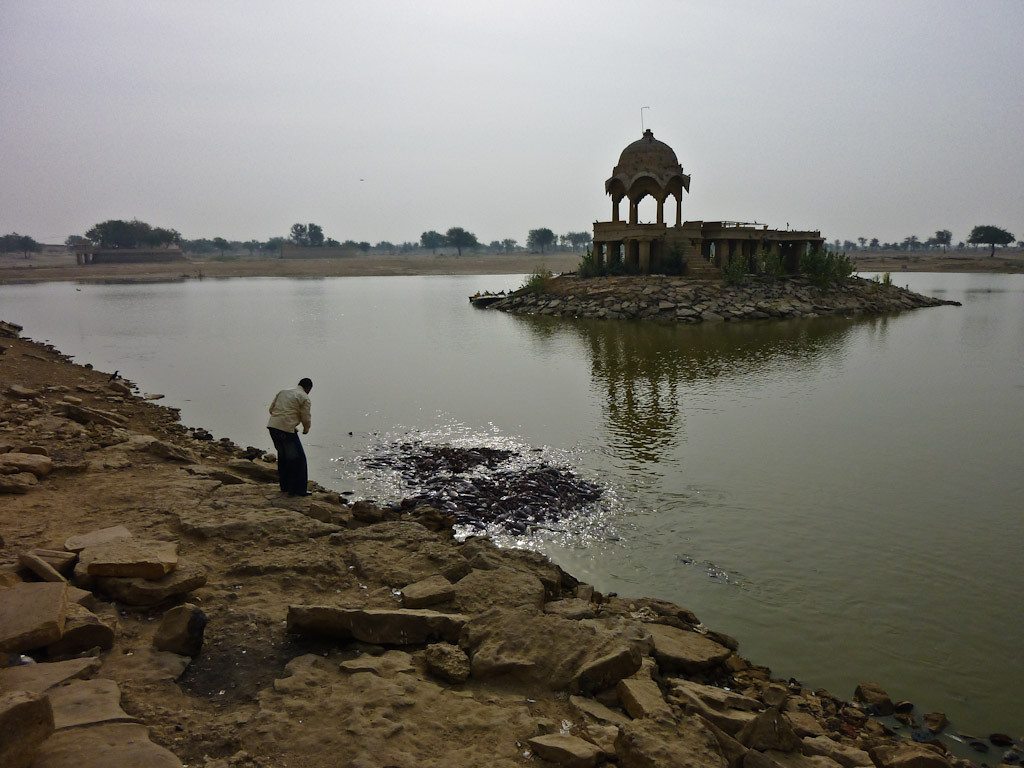 Feeding catfish at Godi Sagar Lake.