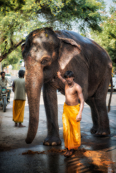 An elephant and his keeper in Jaipur. We saw him washing the animal in the street and stopped to take a picture. Until I gave him fifty rupees, the only view of the elephant I could get was the tail end. The young man (and the elephant) knew the game very well.