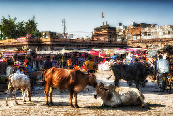 The main market square in Jodhpur. Many outdoor shops had been erected for Divali, selling all manner of gifts and decorations for the holiday. Cows are not for sale.