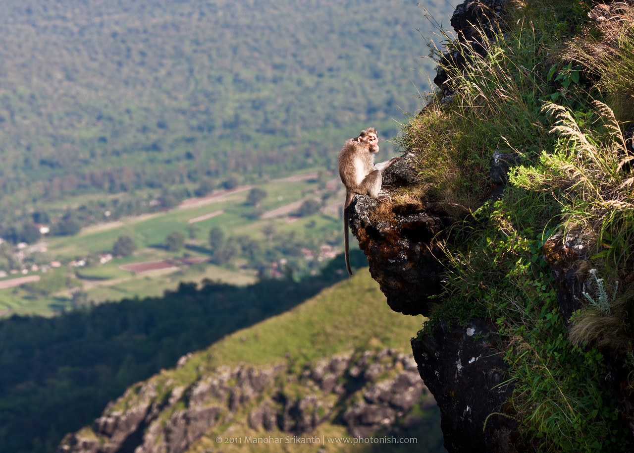 Kemmannugundi, monkey at the cliff.