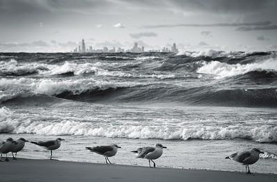 Skyline and Seaguls