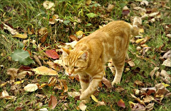 Sluiceway the cat, doing his rounds