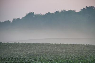 Foggy Morning in a Farmers Field