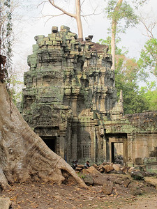 "Ta Prohm in Siem Reap province.  We looked for Lara Croft (Angolie Jolie) of ""Tomb Raider"" fame, but we missed her."