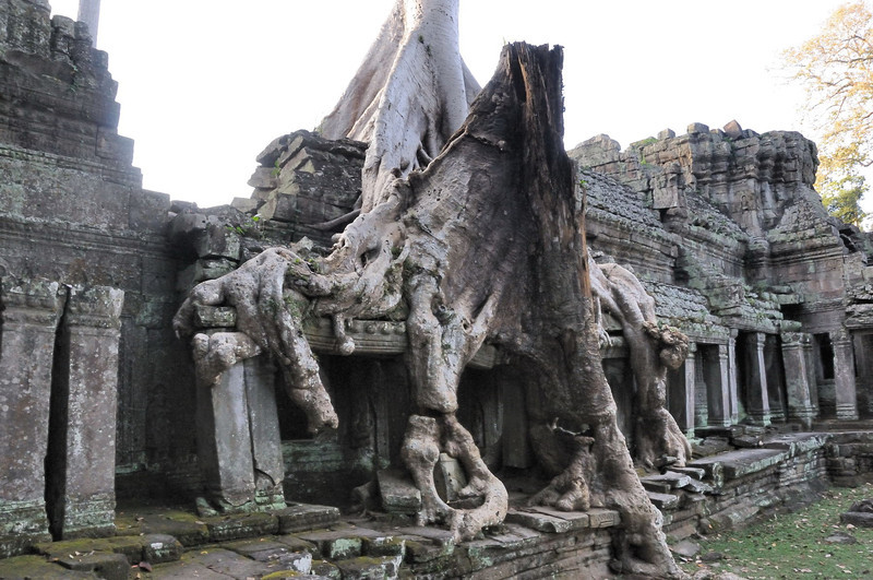 The power of nature at Preah Khan Temple.