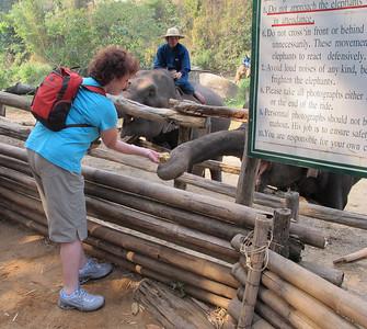 Linda Kasoff feeding an elephant.