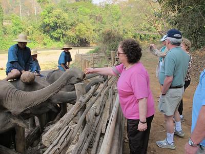 Renee Mirsky feeding the elephants small bananas.