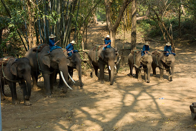 The Chiang Dao Elephant Training Center is located at Ta Yaak Village, Chiang Dao District, about 56kms (35 miles) north of Chiang Mai City, on the road to Fang and Tha Ton. It is on the banks of the Mae Ping River (where the elphants bath before and after their lessons), and is surrounded by rocky hills.  http://www.chiangdao.com/chiangdao/elephanttrainingcenter.htm