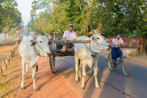 Early morning rush hour in Angkor.