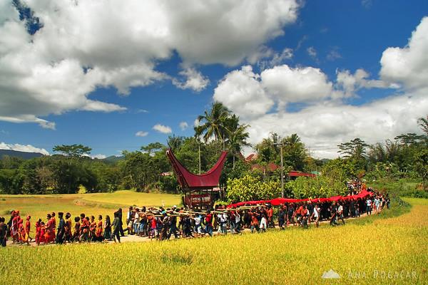 The funeral procession in Tana Toraja