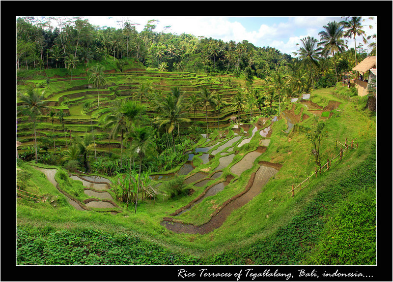 I went on a day tour of Bali hiring a driver on my last day, to take me to a few of the sites and  we stopped quickly by the rice terraces of Tegallalang, in Bali...rice is grown all over Indonesia but not many big layered terraces like these, this was a big thing on my list of things to see in SE Asia however I am told I need to see the ones in the Philippines still.