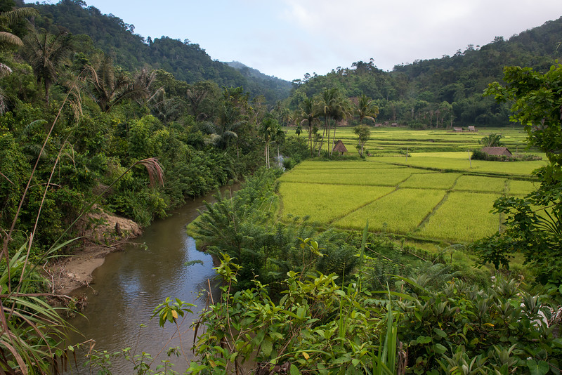 IND Sulawesi -587
