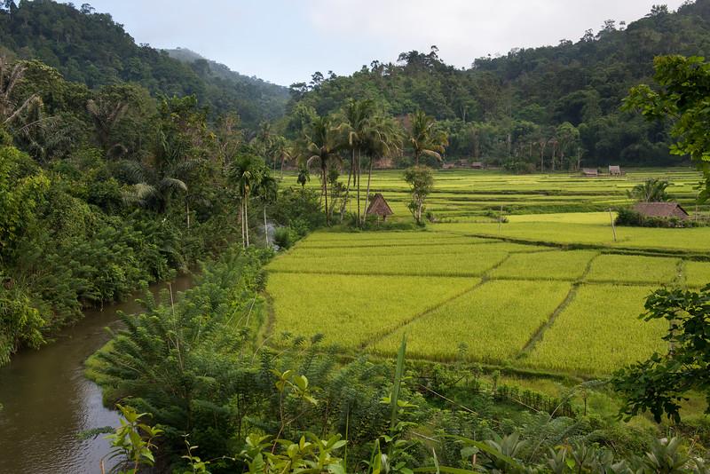 IND Sulawesi -595