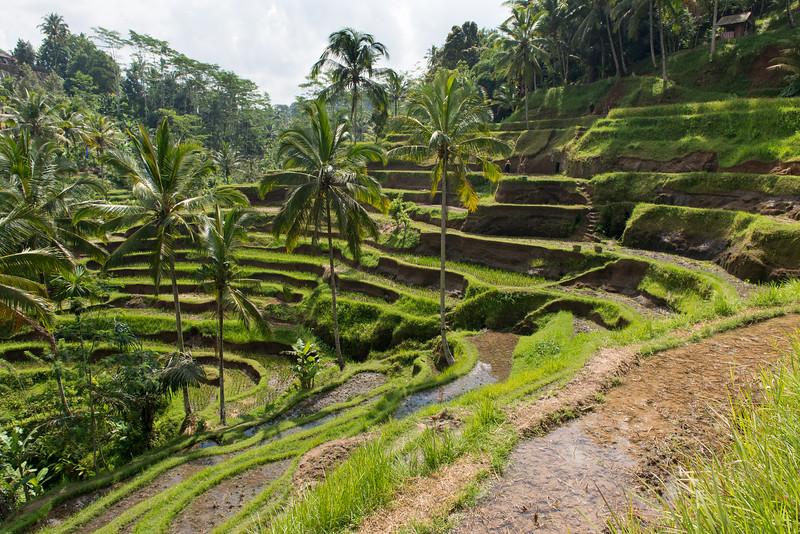 IND Bali -45