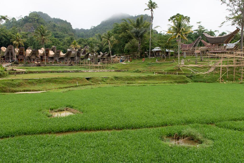 IND Sulawesi -153